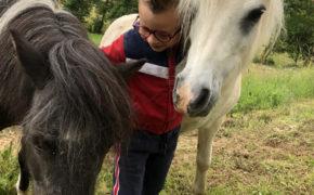 centre equestre saulieu 13